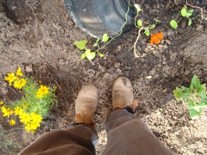 My Blundstone's which are about 20 years old, have seen 4 gardens (including this one), worked at Niagara Nurseries and are really about shot. I take Size 7.
